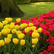 PageLines- flowers.jpg